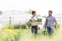 Smiling couple holding crate with vegetables on field — Stock Photo