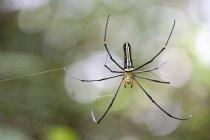 Araignée en vue toile d'araignée — Photo de stock
