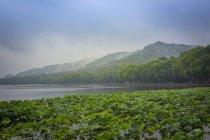 Китай, Чжэцзян, Ханчжоу, Туман, поднимающийся с гор у западного озера — стоковое фото