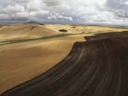 USA, Washington State, Palouse hills, wheat field during harvest time — Stock Photo