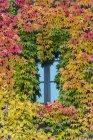 Leaves around a window in autumn, Munich, Bavaria, Germany — Stock Photo