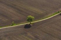 District de Germany, Bavaria, Dachau, Plowed champs avec arbre — Photo de stock