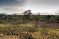Vue panoramique du parc national de Yala, Sri Lanka — Photo de stock