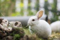 Дневное время крупным планом вид маленький белый заяц — стоковое фото