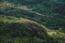 Bulgarie, Trun, maisons en bois dans les montagnes — Photo de stock