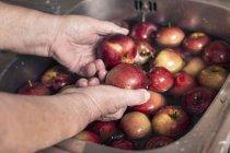 Weibliche Hände waschen Äpfel — Stockfoto