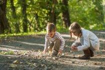 Дети собирают каштаны на лесной дорожке — стоковое фото