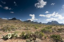EUA, Texas, paisagem natural cênica com cactos — Fotografia de Stock