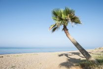 Daytime view of palm tree on beach in Glifa, Greece — Stock Photo