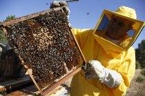 Пчеловод в защитный костюм, холдинг рама с Сота — стоковое фото