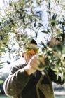 Uomo maggiore raccolta olive — Foto stock