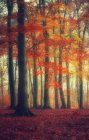 Autumn forest with red flowers — Stock Photo