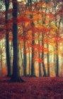 Foresta di autunno con i fiori rossi — Foto stock