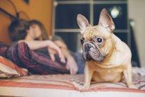 Französische Bulldogge sitzend auf dem Bett zu Hause und junges Paar küssen im Hintergrund — Stockfoto