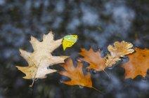 Осенние листья в луже — стоковое фото
