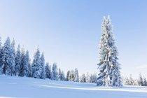 Selva Boema in inverno, Baviera, Germania — Foto stock