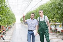 Man with clipboard talking to worker in greenhouse with tomatoes — Stock Photo