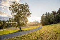Autriche, Carinthie, Ludmannsdorf, route de campagne, forêt en automne, contre le soleil — Photo de stock