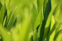 Листья в солнечном свете на размытом фоне — стоковое фото