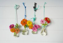 Laboratory glassware with common zinnia fixed with cords hanging on a wall — Stock Photo