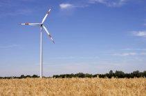 Alemania, Renania del Norte-Westfalia, rueda y trigo campo del viento en verano durante el día - foto de stock