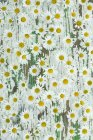 Top view of daisies blossoms on shabby wooden surface — Stock Photo