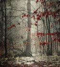Зимой Снежный лес с Последние красные листья — стоковое фото