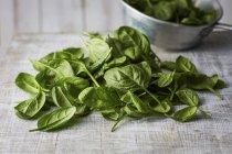 Свежие листья шпината — стоковое фото