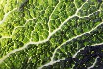 Крупным планом свежий лист савойской — стоковое фото