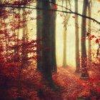 Floresta de Outono com o pano de fundo amarela turva — Fotografia de Stock