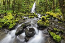 США, Oregon, Hood River County, Columbia River Gorge, Ruckel Creek Falls — стоковое фото