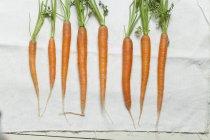 Vue de dessus de huit carottes sur un tissu blanc dans une rangée — Photo de stock