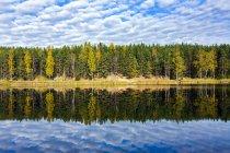 Estonia, Odri lago, árboles reflexionando sobre aguas tranquilas - foto de stock