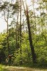 Батько і дочка Піші прогулянки у лісі — стокове фото