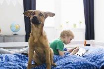 Собака сидит на кровати с мальчиком, используя цифровой планшет на заднем плане — стоковое фото