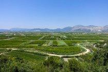 Kroatien, Dalmatiner, Blick auf die Landschaft der Riviera von Makarska und der grünen Wiese tagsüber — Stockfoto