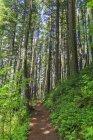 Multnomah Каунті, ущелини річки Колумбія, США, штат Орегон, туристичний шлях у лісі — стокове фото