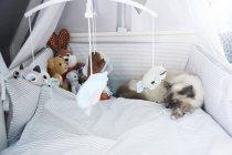 Chat couché dans la crèche sous jouets au-dessus du lit — Photo de stock