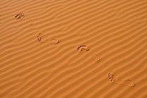 Algeria, footmarks and sand ripples on a desert dune at Sahara — Fotografia de Stock