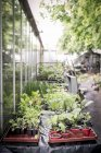 Seedlings in a plant nursery during daytime — Stock Photo