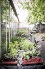 Plántulas en un vivero de plantas durante el día - foto de stock