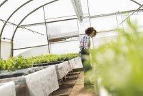 Молода жінка садівник працює в розплідники заводі — стокове фото