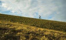 Joven trotando en el prado - foto de stock