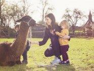 Мать и маленькие дети играют с ламой на пастбище — стоковое фото