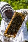 Пчеловод Холдинг барды с Сота — стоковое фото