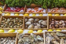 View of Display with fresh seafood — Stock Photo