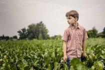 Boy standing in beet field — Stock Photo