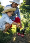 Senior woman and her little granddaughter harvesting vegetables in the garden — Stock Photo