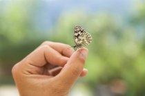 Schmetterling auf weiblicher Hand — Stockfoto