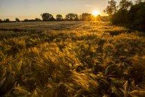 Мальовничим видом, поля на захід сонця, Баварія, Німеччина — стокове фото